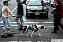 Hold the dog (Just a guy who likes to take pictures) Tags: sf auto sanfrancisco california street city portrait people urban woman usa dog pet motion girl car shirt female america bag t photography us movement san francisco fotografie photographie unitedstates arm state candid united tshirt running hond run line plastic hund human stadt vs states van frau amerika vrouw hold stad staten iphone asfalt wagen verenigde verenigdestaten