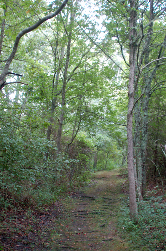 trail-through-green-woods-copy.jpg