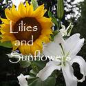 Lilies and Sunflowers