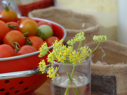 cherry tomatoes & wild fennel