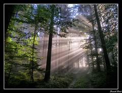 rayons de soleil foret d'alaise (francky25) Tags: de soleil foret hdr rayons doubs comté franche flickraward passiondéclic dalaise