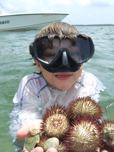 Big bonanza of sea urchins