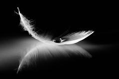 Light (ICT_photo) Tags: reflection water glass sb600 feather drop lightness strobist ictphoto ianthomasguelphontario