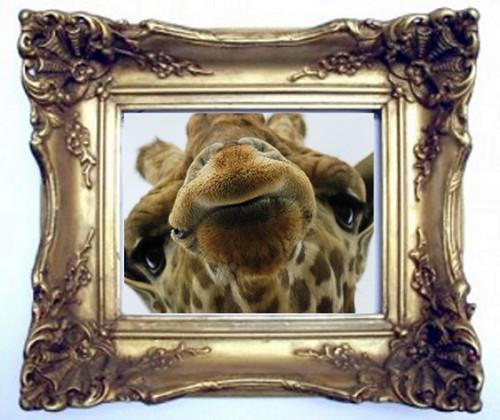 hogwartsgiraffe