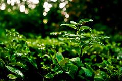 Dew drops (preteentitans) Tags: rain pentax lightroom3 ap2dbreadth