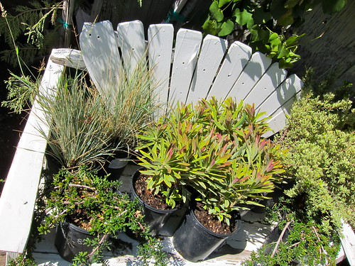 Lots of new Euphorbias in!