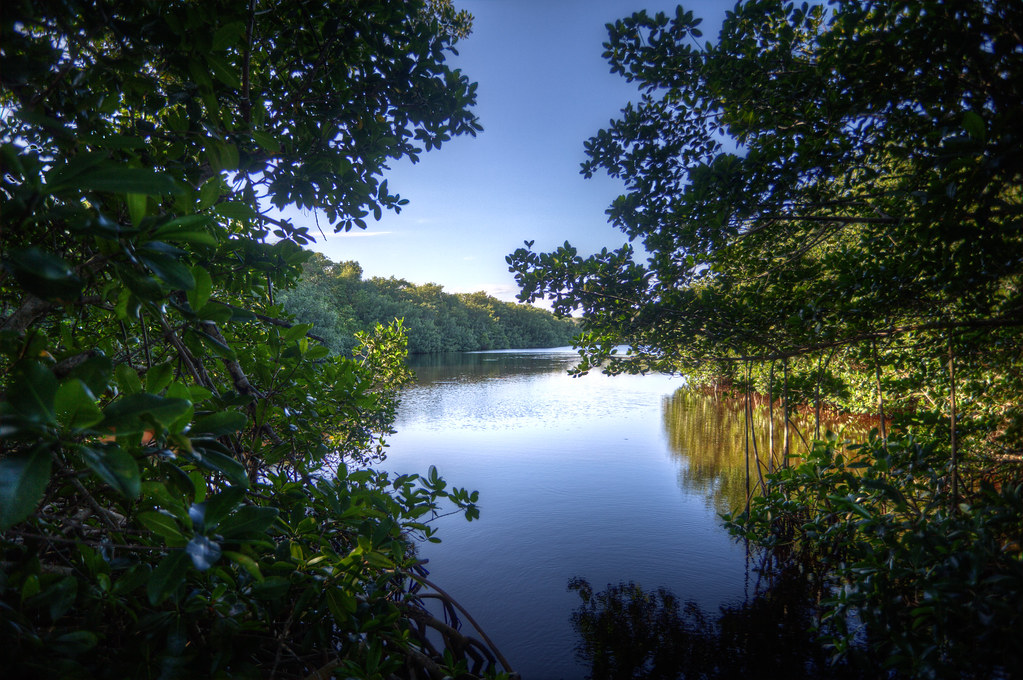20101126-EvergladesHDR-8338