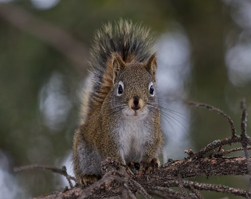 Squirrel 201101IMG_2370