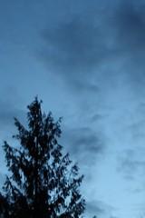 False Dawn In Seattle (kvsemple) Tags: falsedawn ds445