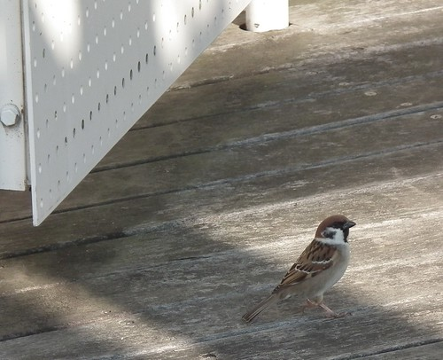 Good morning, sparrow