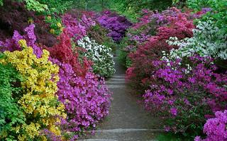 Leonardslee Gardens, West Sussex, UK | Vibrant...
