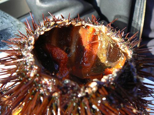 oursins 6.jpg