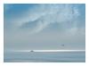 floating and flying (kurtwolf303) Tags: seaview ship water wasser seagull möwe sky himmel clouds wolken schiff sea ocean meer seascape horizont horizon pastel olympusem1 omd microfourthirds micro43 systemcamera mirrorlesscamera spiegellos mft kurtwolf303 unlimitedphotos blue olympusblue blau transportation frame rahmen topf25 250v10f 500v20f topf50 flickrelite topf75 750views 800views 900views topf100 1000v40f 1500v60f topf150 2000views