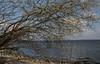 Weidenkätzchen (Salix sp.); Hemmelmark, Barkelsby (153) (Chironius) Tags: barkelsby schwansen schleswigholstein deutschland germany allemagne alemania germania германия niemcy baltischesmeer ostsee balticsea østersøen morzebałtyckie östersjön балтийскоеморе läänemere baltijasjūra itämeri baltijosjūra østersjøen балтыйскаемора baum bäume tree trees arbre дерево árbol arbres деревья árboles albero árvore ağaç boom träd blüte blossom flower flowers fleur flor fiore blüten цветок цветение rosids fabids malpighienartige malpighiales weidengewächse salicaceae weiden weide salix osier willow marsault saule sauce salice salcio ива söğüt wilg и́ва