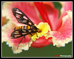 Lunch Time (deddy_s13) Tags: pink flower macro lunch olympus bee honey e510