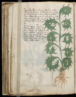 Voynich Manuscript Page103.jpg