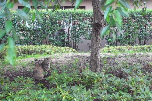 Today's Cat@2010-06-28