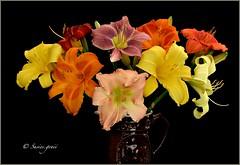 DAYLILY BOUQUET (susies.genii) Tags: pink flowers orange macro yellow blackbackground peach daylily bouquet antiquepitcher browncrockery multicoloredbouquet