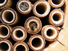 Bee hotel - room booked
