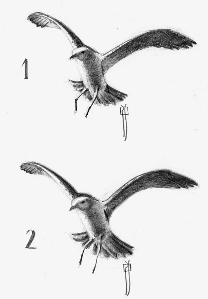 a gull, two techniques