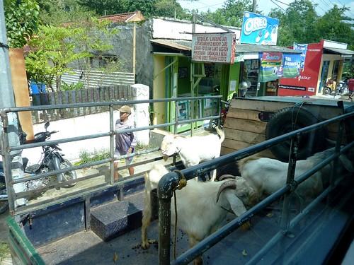 Madura-De Kamal a Sumenep-bus (112)