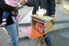 Conejitos adivinadores en Karaköy