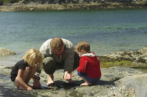 Hermit Crabs, Chiton, Anenome...