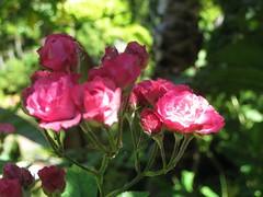 Flowers of Filbert Steps