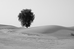 Dessert Tree (Q-BEE) Tags: bw tree dessert urlaub platinumheartaward