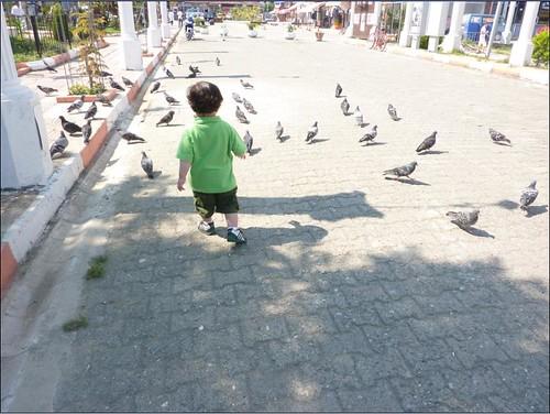 kuşlar8