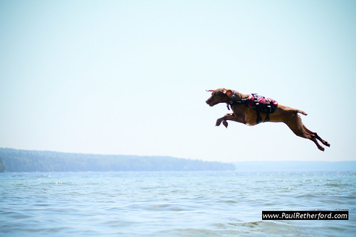 dog jumping off of dock
