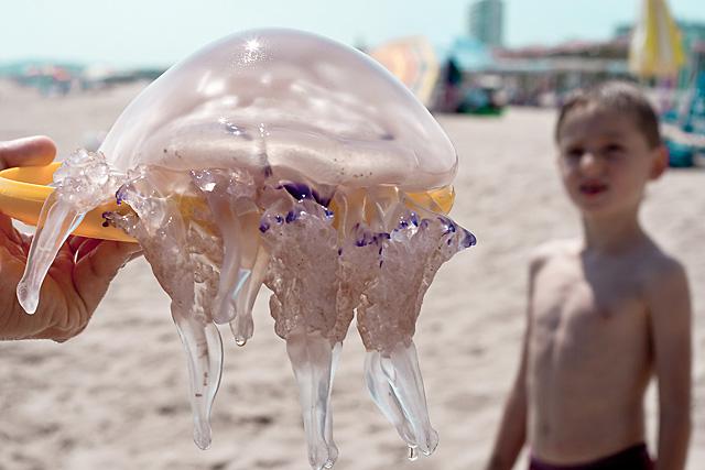 El ataque de las medusas asesinas