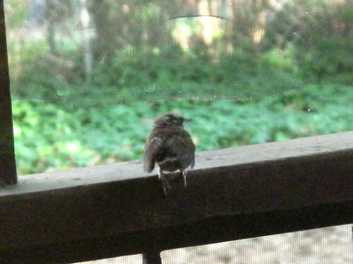 Baby Birds 21