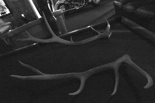 joe's antlers