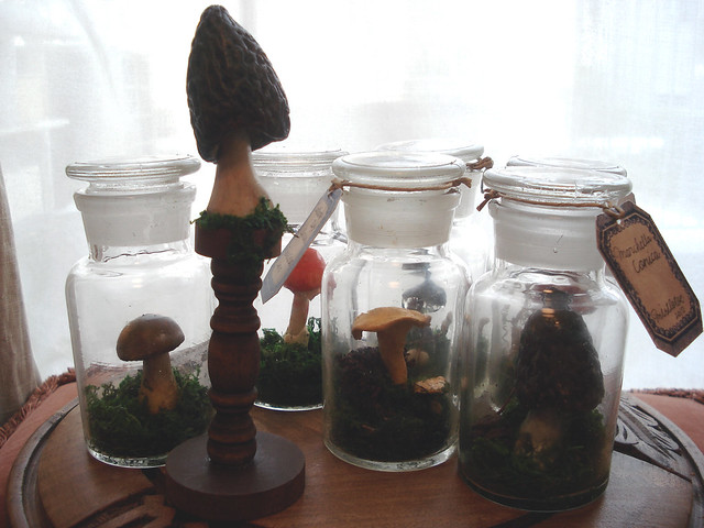 Medicine Bottle in Forest mushrooms