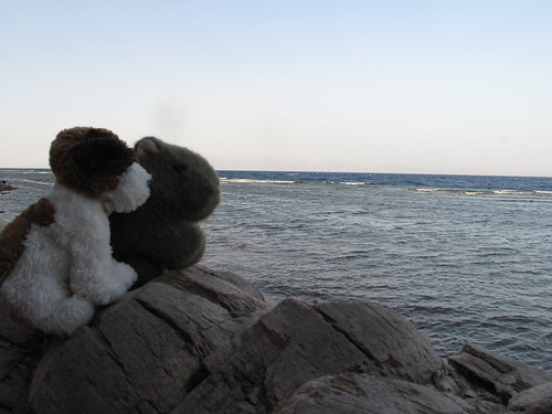 Wombat & Friend