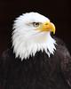 Hawk Conservancy 17