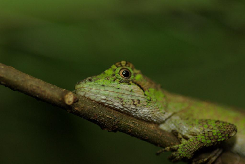 四坎水 蛙 蛙 蛙 ~~