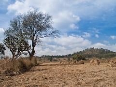 Imagen 25 (cguevara_aguilar) Tags: cielo árbol nube ‡rbol rbol cerrozapotecas