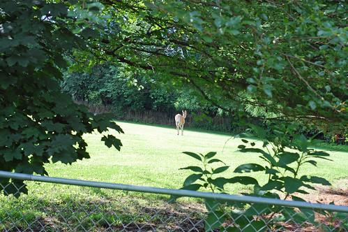 71010 Deer 03