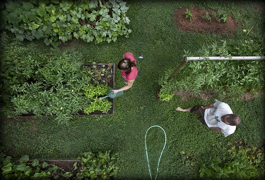 193/365: Summer Garden.