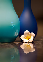 Frangipani Reflections (Ingrid Douglas Images - ART in Photography) Tags: frangipani stilllifephotography granitereflections ingridinoz perfectoartsdreamcaptures reflectionsinthekitchen beautifulturquoiseandbluevases