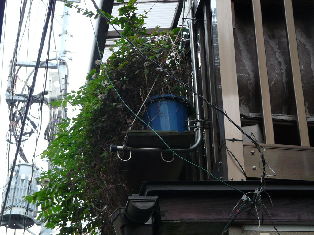 Striking Hanging Garden in Yanaka