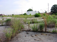 canShawnee7thSt 294 (Steph M Clark) Tags: city urban abandoned metro kentucky central july louisville algonquin desolate 2010