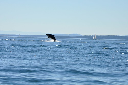 Whale Watching 28