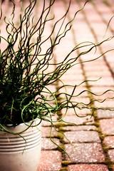Spiralis - corkscrew rush (d_russell) Tags: brick green picnik corkscrewrush ef28135mmf3556isusm spiralis ortonish picnikers picnikusers picnikcrossprocessing 3652010