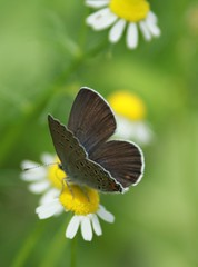 butterfly black (RoYaLHigHnEsS1) Tags: summer flower canon butterfly insect