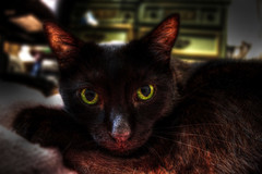 Gremlin Cat HDR (3)