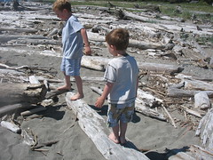 Driftwood on Double Bluff Beach