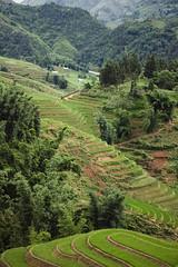 Dans le dédale de rizières